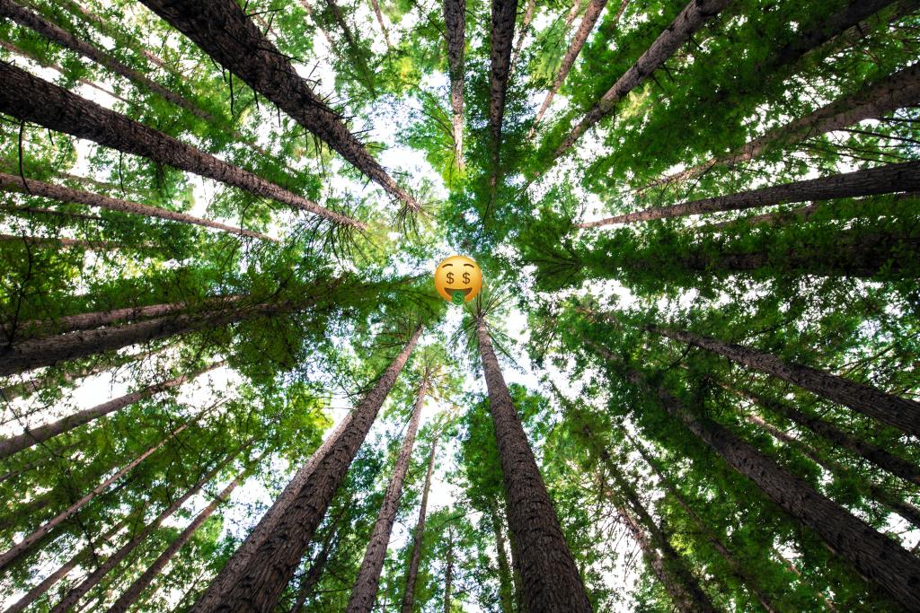 como cuidar el medio ambiente